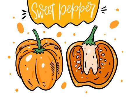 Yellow sweet pepper whole and half. Hand drawn vector illustration in cartoon style. Isolated on white background. Design for poster, banner, menu, market and web.