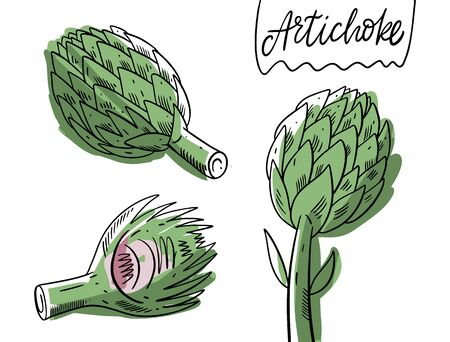 Green Artichoke hand drawn vector illustration. Isolated on white background. Cartoon style. Design for banner, poster, menu and web.