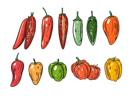Different Peppers set. Flat vector illustration. Cartoon style. Isolated on white background. Design for banner, poster and print. Illustration