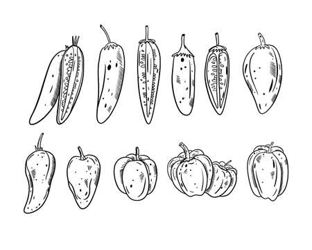 Different Peppers set. Black color outline style vector illustration. Isolated on white background. Design for banner, poster and print.