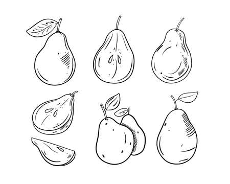 Different Pear set. Black color outline style vector illustration. Isolated on white background. Design for banner, poster and print.  イラスト・ベクター素材