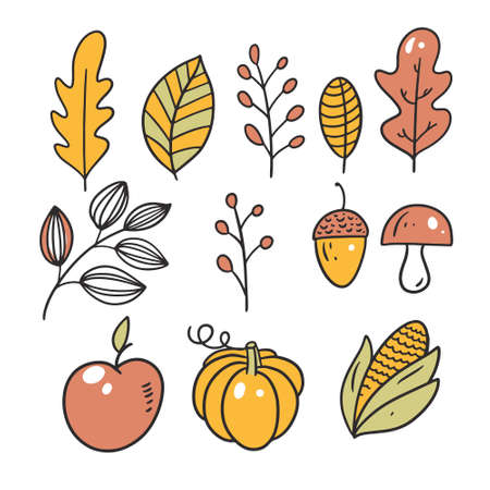 Pumpkin, apple, mushroom, nut and leaves.Hand drawn sketch. Line art style.
