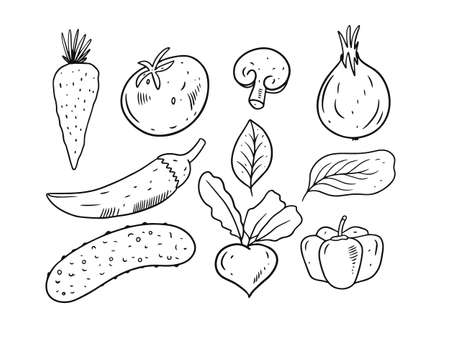 Vegetables elements set. Hand drawing doodle style.
