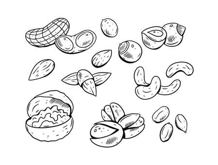 Hand drawing nuts set. Black and white color. Engraving style. Doodle elements. Vettoriali