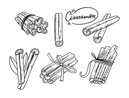 Cinnamon hand draw sketch vector illustration. Engraving style.