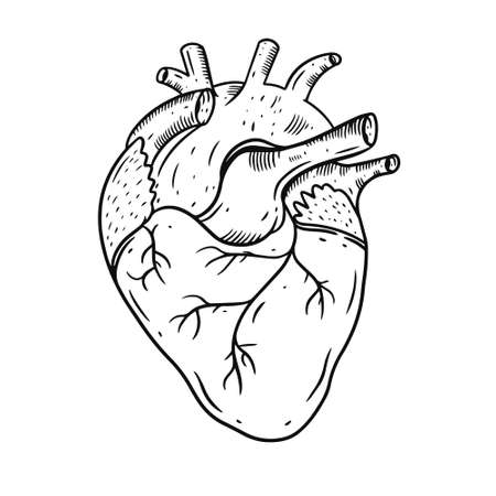 Heart realistic hand draw vector illustration. Engraving style. Black color. Vettoriali