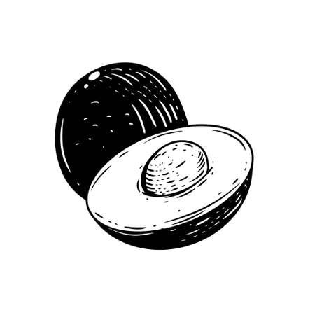 Hand drawn avocado. Engraving black color sketch.