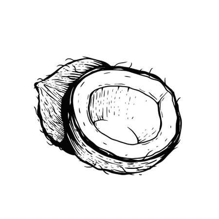 Coconut engraving sketch. Black color vector illustration. 일러스트