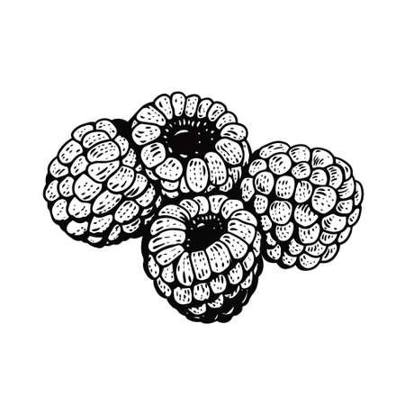 Raspberries hand drawn. Black color vintage style. Vector illustration.