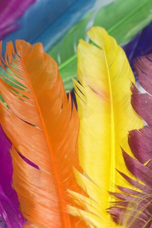 diferent animal color feathers in vertical position photo