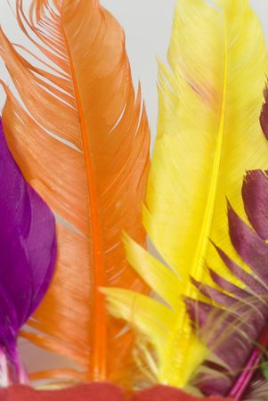 horizontal position: colorful and beautiful animal feathers on horizontal position