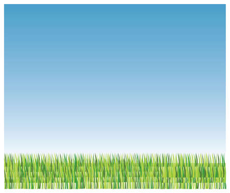 brigth: Color green grass and brigth blue sky Stock Photo