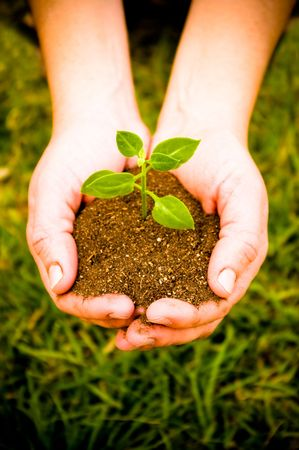 hand holding a green plant on soil   photo