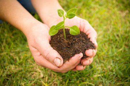 hand holding a green plant on soil   Foto de archivo
