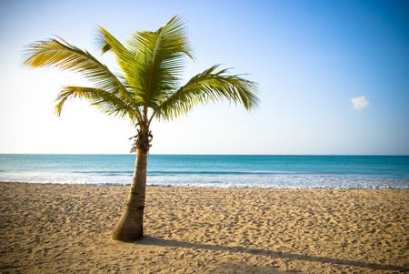 palm in beautiful view from caribbean beach photo