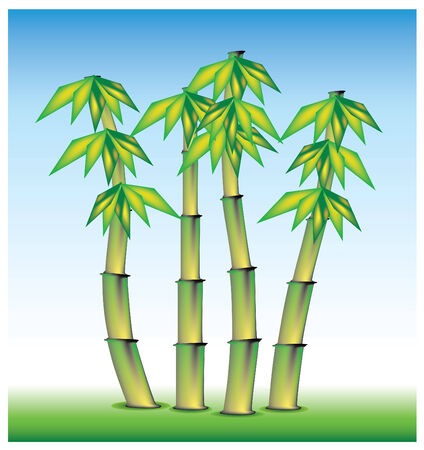 lucky bamboo: bamboo from asi, set in vector mode