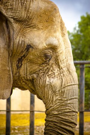 elephant in zoo with warm color tones photo