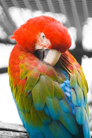 parrot in perch in winter time photo