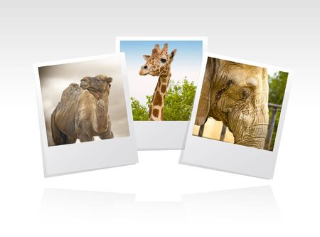 Photo Frame zoo Foto de archivo - 3852315