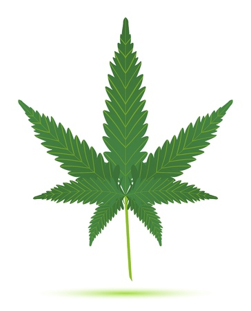 cannabis leaf isolated illustration