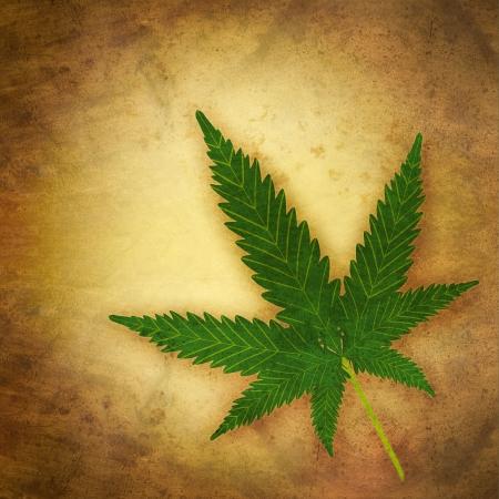 hemp: Cannabis Blatt im Grunge-Stil