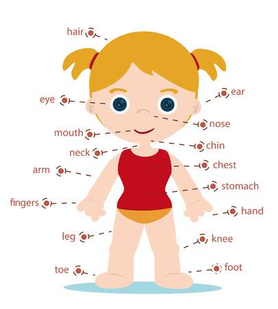 meisje lichaamsdelen in kaart te brengen voor school Stock Illustratie