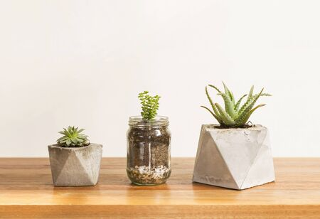 planters: Three cactus and succulent concrete planters, interior style