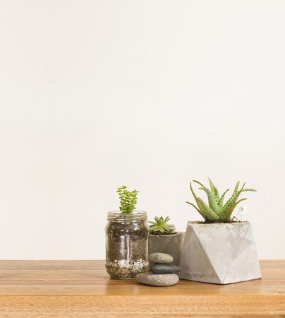decor: Succulent plants and stones, home decor