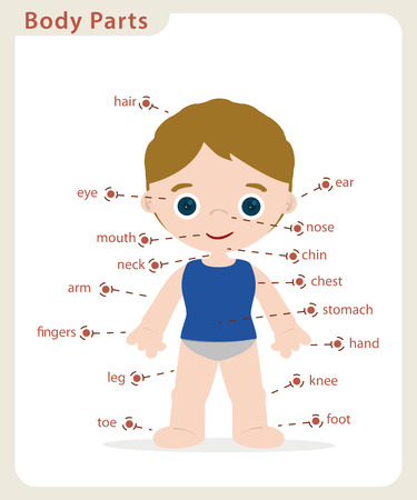 boy body parts diagram poster Illustration