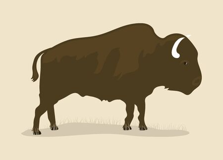 Vintage Buffalo draw, north america animal  イラスト・ベクター素材