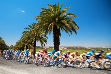 road cycling: Group of riders at a bike race passing under palm tree