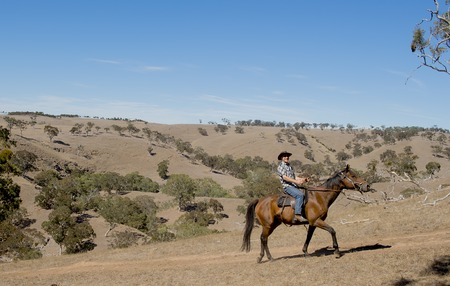 quarter horse: young horse instructor or cattleman riding the animal wearing cowboy hat and rider boots looking cool while taking a ride at countryside summer landscape