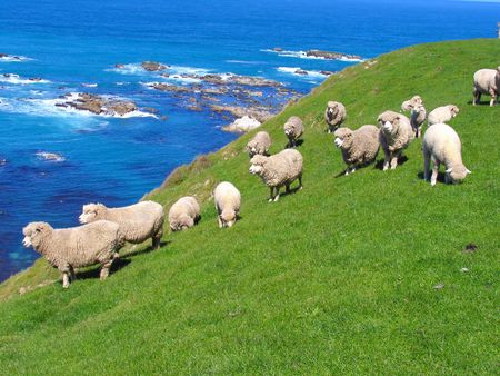 land mammals: Sheep And Grassland At Seashore Stock Photo