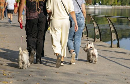 People walk along the waterfront with West highland white Terriers.People photographed to the waist. Stock fotó