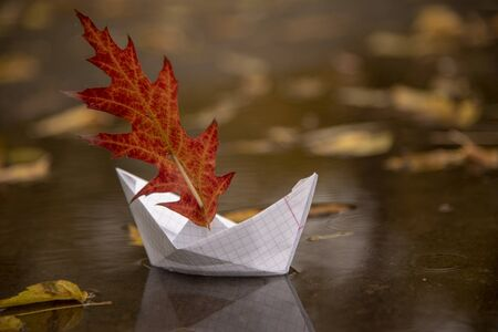 A paper boat floats in a puddle, an oak red leaf instead of a sail, around the fallen autumn leaves lie.