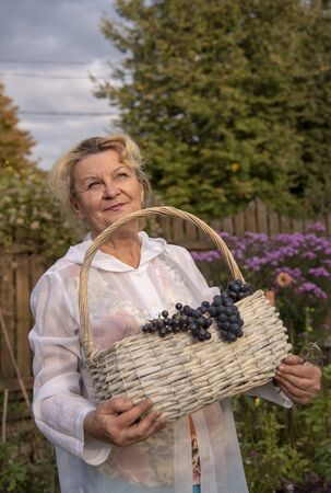 A woman of sixty in a white windbreaker with a hood sits in her garden and holds a basket full of black grapes.Illuminated by sunlight. Stok Fotoğraf