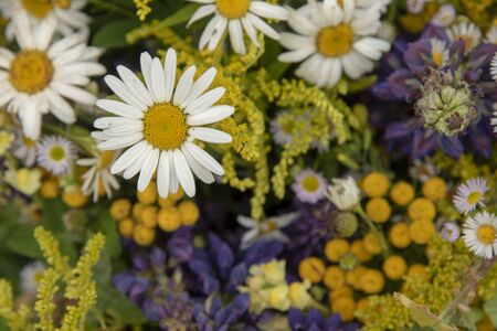 Bright floral background.Focus on the daisies, the rest of the flowers are blurred.
