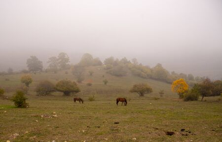 Autumn landscape. Horses graze in the fields, trees with colorful leaves on the mountainside. A mist closing in. 写真素材