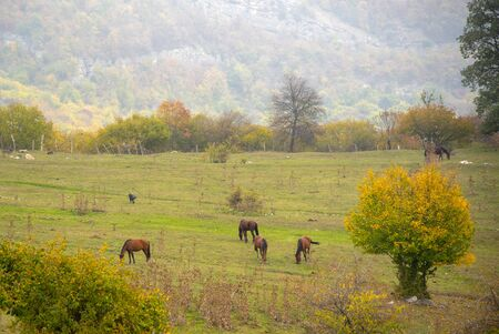 Herbstlandschaft. Pferde grasen auf den Feldern, Bäume mit bunten Blättern am Berghang. Ein Nebel schließt sich ein.