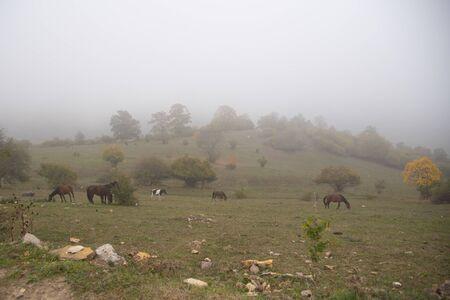 Herbstlandschaft. Pferde grasen auf den Feldern, Bäume mit bunten Blättern am Berghang. Ein Nebel schließt sich ein. Standard-Bild