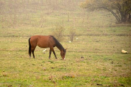 A lone horse grazes on green fields in a misty haze. 写真素材