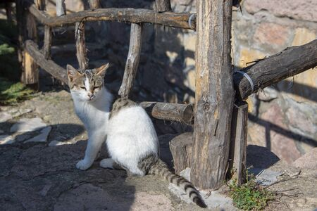 A mongrel cat sits under a fence and basks in the sun.