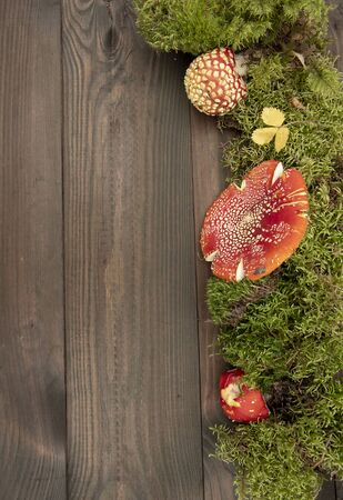 Mushroom layout. Bright red toadstools and green moss on a wooden background. Top view. Free copy space.