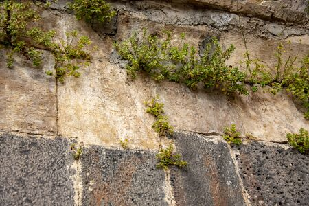 A stone wall made of large blocks, with plants growing in crevices.
