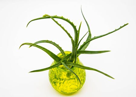 Aloe in a green glass vase on a light background. Banco de Imagens - 133627012