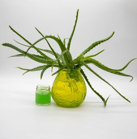 Branches of aloe in a glass green vase and a jar of aloe juice. Light background. Banco de Imagens - 133626654