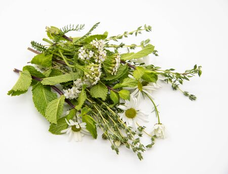 Bouquet of fresh spicy herbs and medical herbs on a light background Banco de Imagens - 133626665
