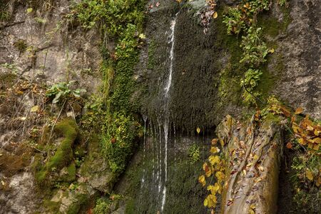 A small waterfall flows down the rock surrounded by moss and bushes.