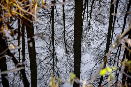 Reflections of trunks and branches of trees in the water.Made in late autumn. Stock fotó