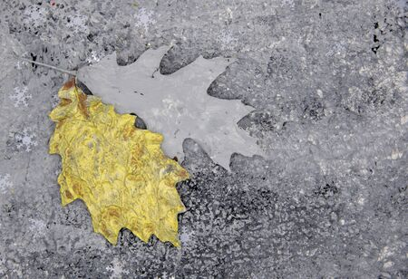Selective soft focus.Two painted oak leaves on a mottled gray background with snowflakes. Top view, copy space, flatlay Stock Photo